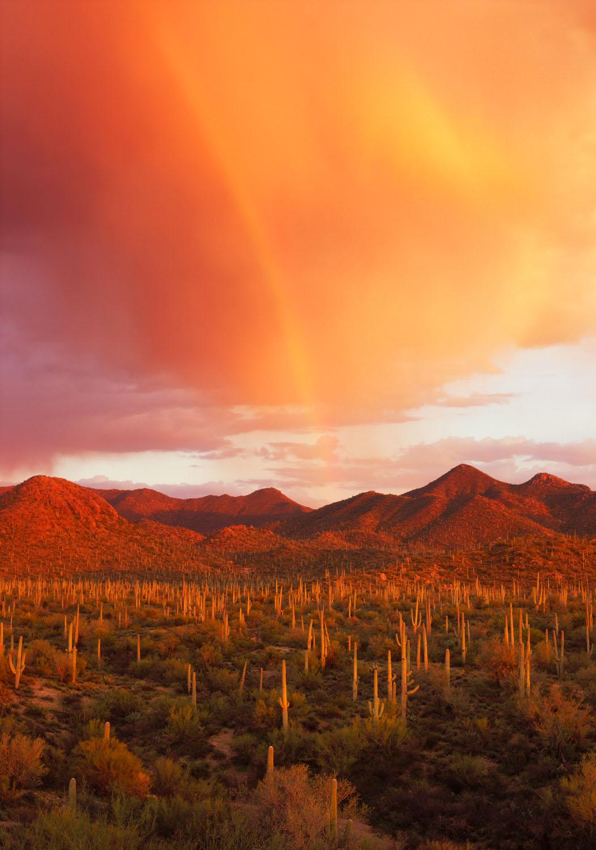 Rainbow_Saguaro