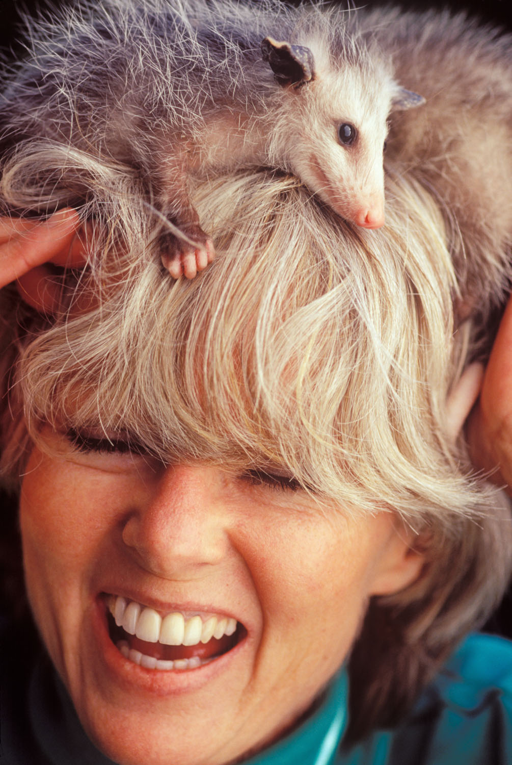 portrait of wildlife rescuer and young opossums