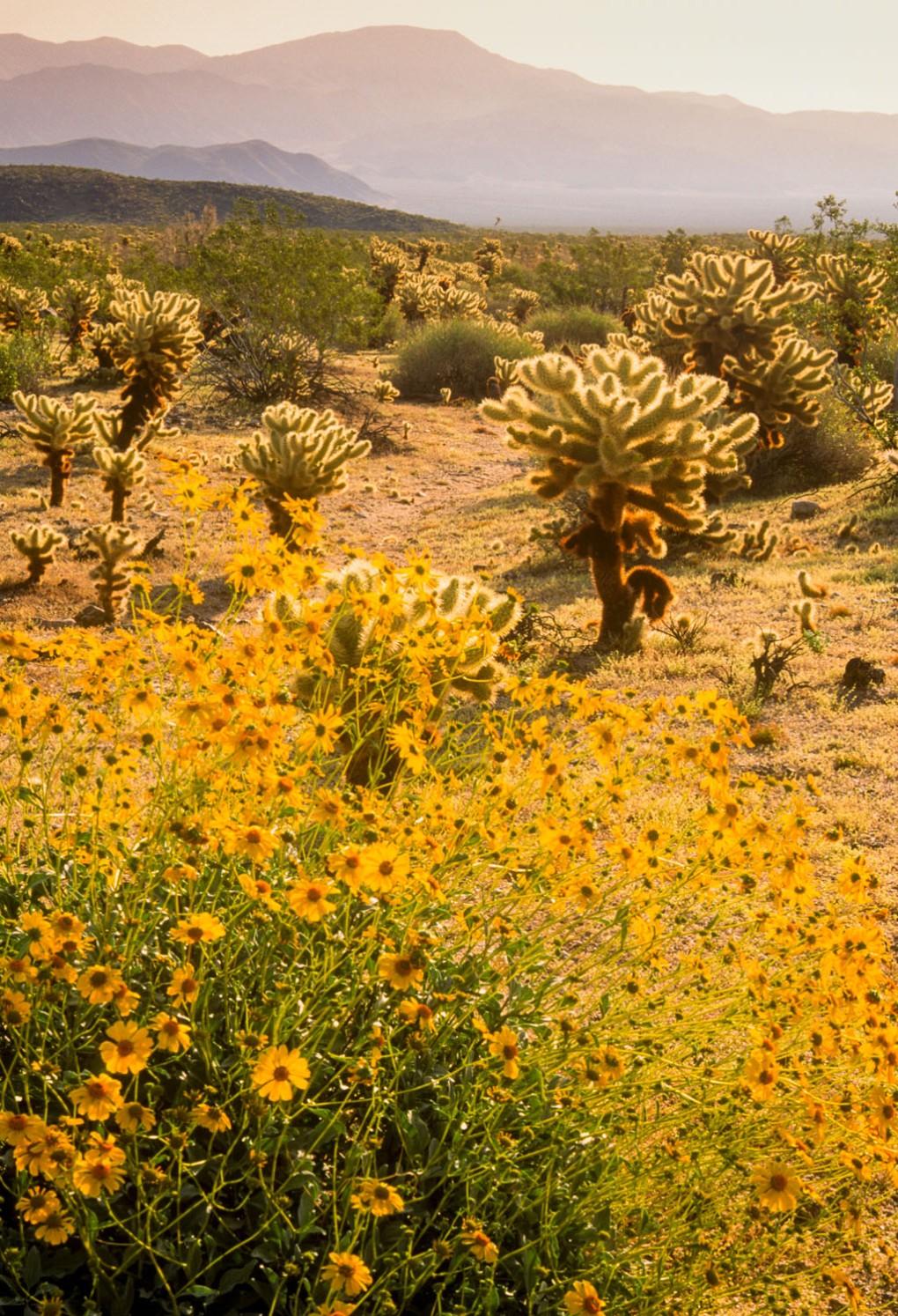 desert flowers lit with backlighting