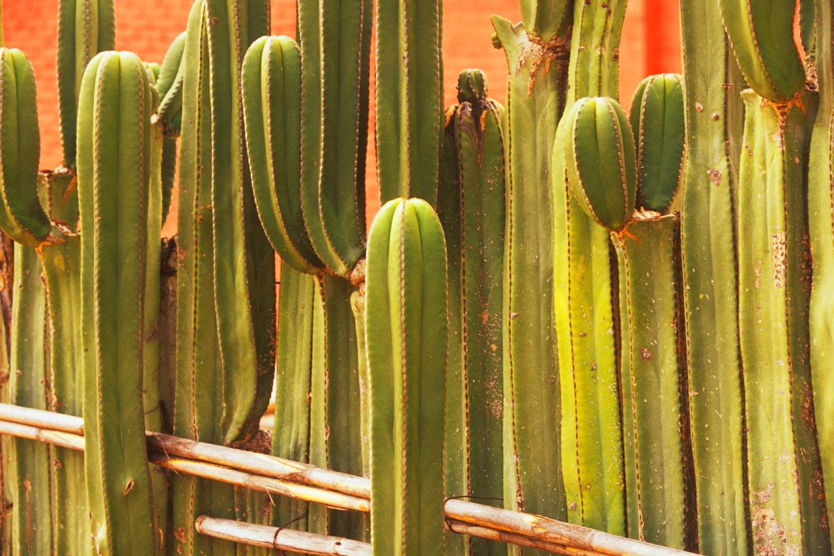 cactus fence detail
