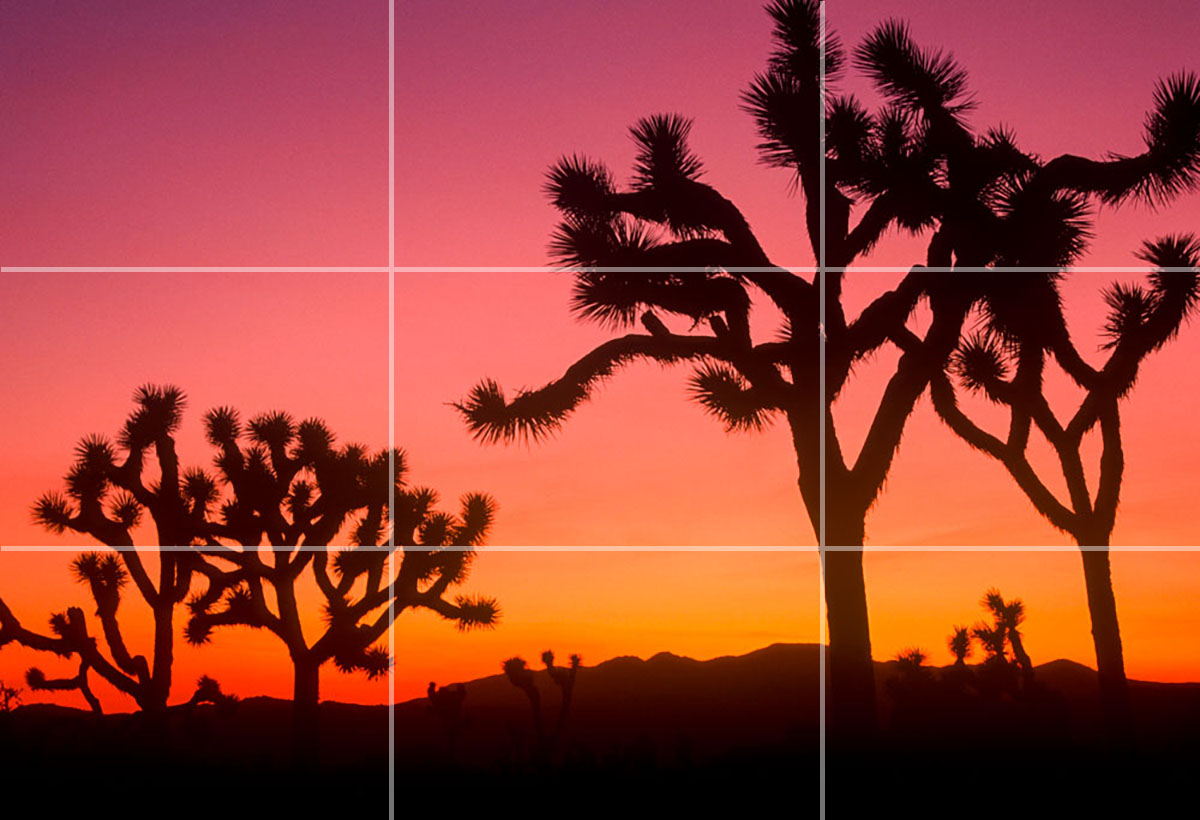 joshua trees at sunset in thirds composition
