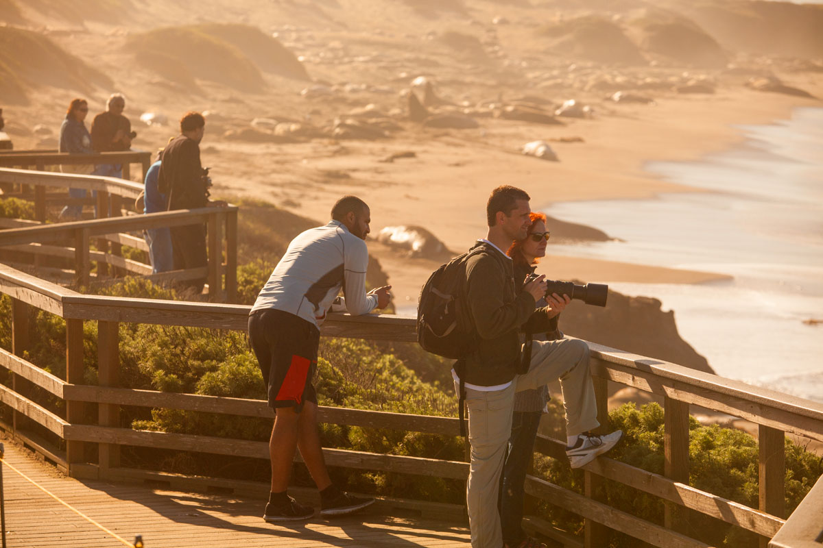 Tourists view elephant seals.