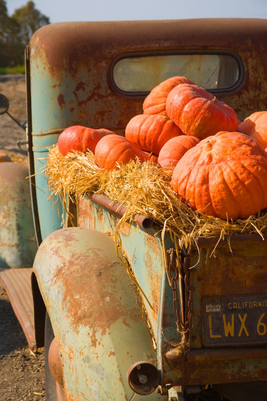 Halloween pumpkins in an old farm truck