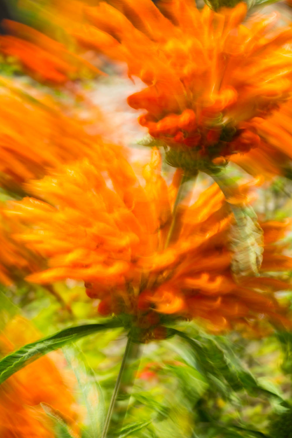 Flowers blowing in the breeze produce motion blur