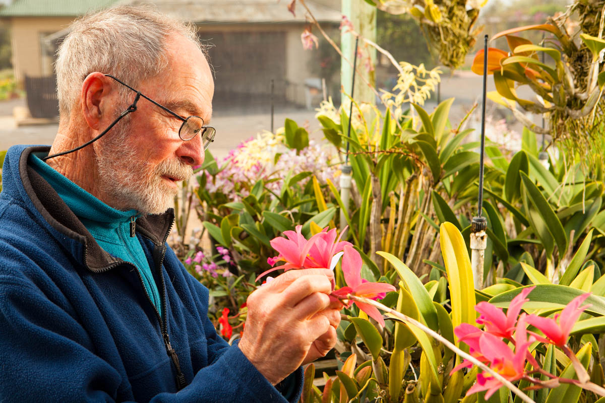 Orchid collector tending plants in his shade house