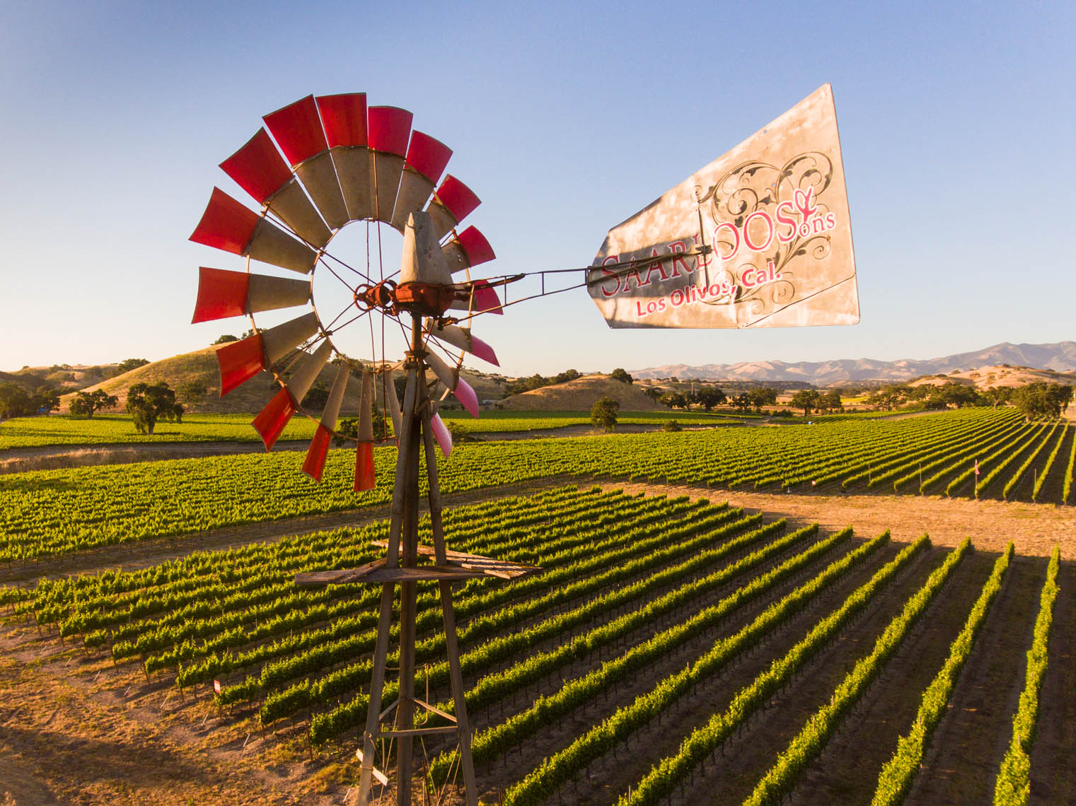 Low altitude aerial of windmill and vineyard