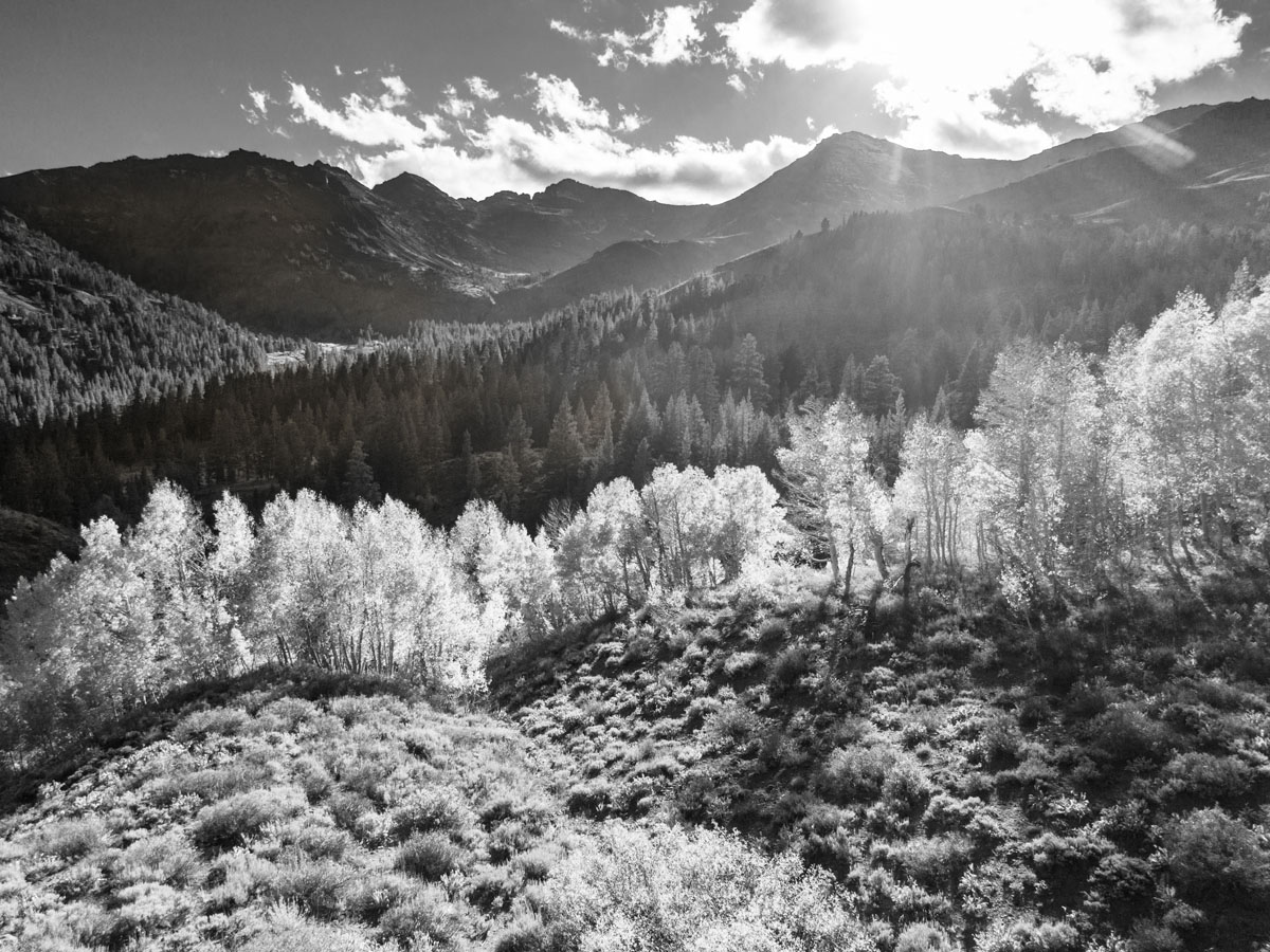 I lightened the grove of aspen trees in the foreground