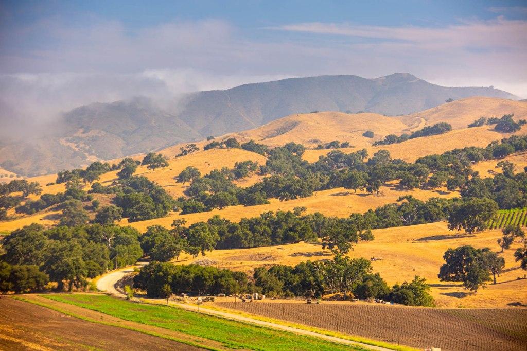 Clearing fog over Folded Hills Farmstead, Santa Ynez Valley, California
